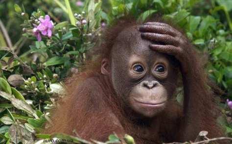 monkey-dear